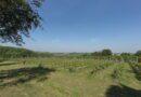 """Wijngoed """"Vidaigne"""" (Heuvelland bij Ieper, België)"""