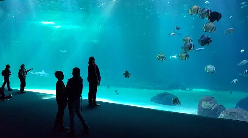 Nausicaa Centre National De La Mer (Boulogne-sur-Mer, Frankrijk)